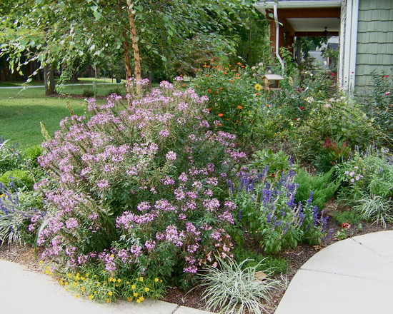 Greatest Cottage Garden Plants : Cottage Gardens Eclectic Landscape Front Yard Rain Ornamental Edible Garden