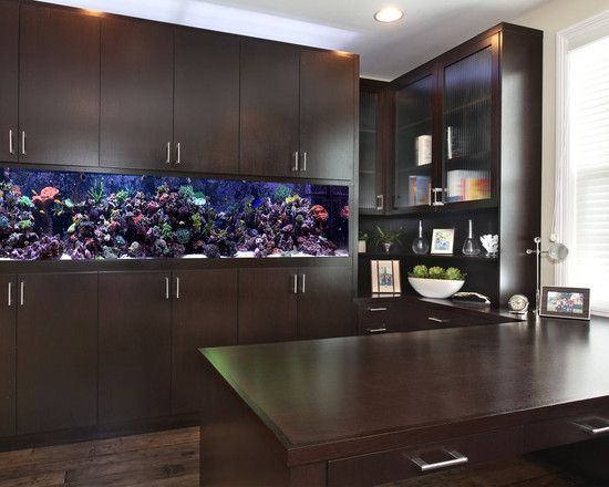 Innovative Modern and Colorful Fish Tanks: Inspiring Contemporary Home Office Colorful Fish Tanks In A Walled Room Add Fish Tank For View Like The Tank Alot With The Dark Wood