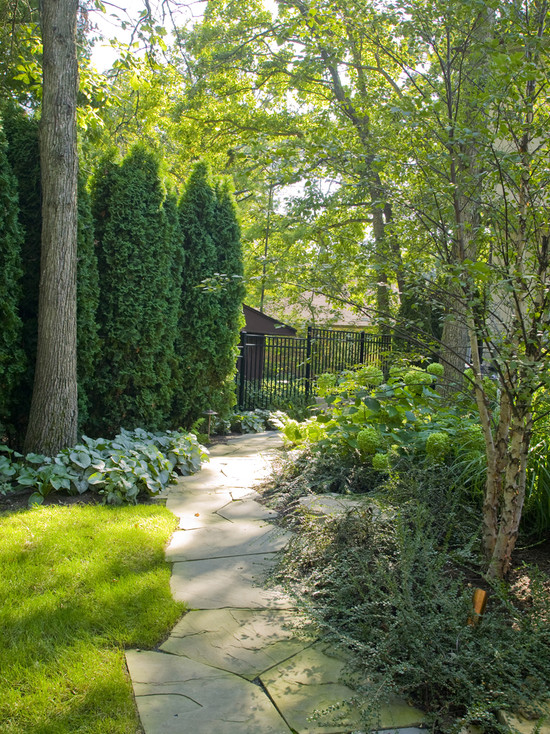 Surprising Good Trees For Privacy: Traditional Landscape Natural Privacy Screen With Oak Tree In Front Arborvitae Close To Tree Annuals Planted Around The Trees