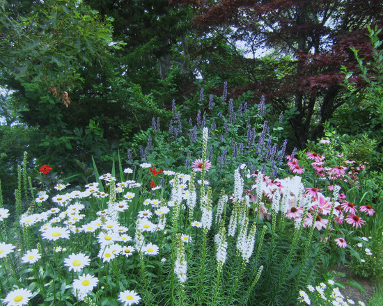 Greatest Cottage Garden Plants: Tropical Landscape Cottage Garden For In Front Of The Stone Wall Exuberant Mix Of Colors