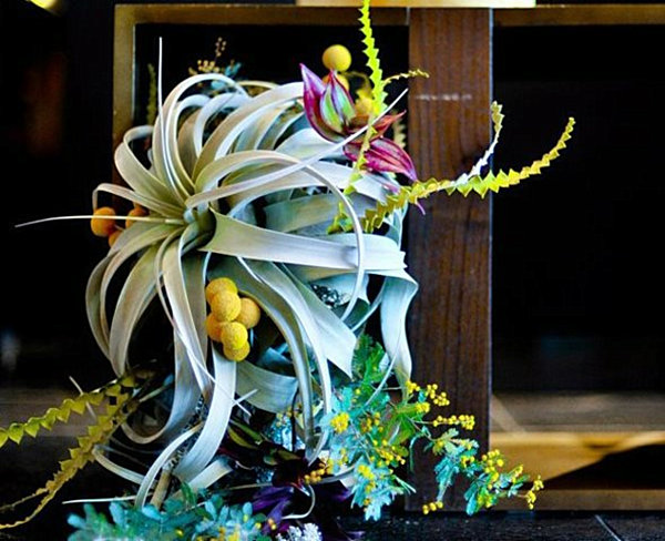 Centerpiece Of Dining Table To Create Inspiring Dining Room : Air Plant Centerpiece Arrangement