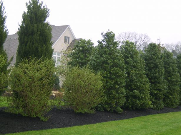Do Up Your Exterior By Using Astonishing Good Trees For Privacy: Columnar Plants For Nashville Landscapes ~ stevenwardhair.com Outdoor Design Inspiration