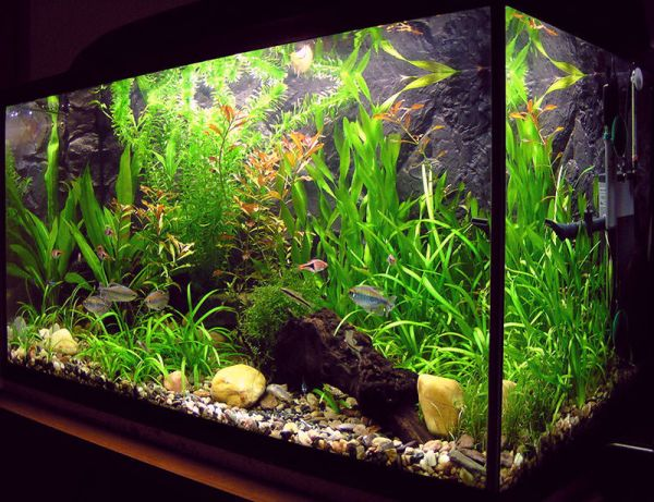 Charming Fish Tanks: 28 Playful Pictures : Freshwater Fish Tanks Are Far Easier To Maintain Than Saltwater Tanks