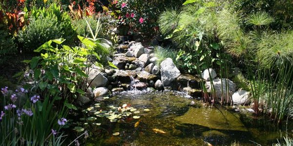 Natural Garden Landscape Arranged Artistically In Its Design : Natural Look Of The Koi Pond Adds To The Beauty Of The Landscape