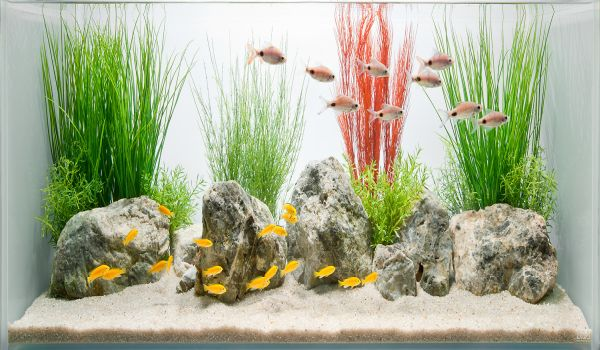 Charming Fish Tanks: 28 Playful Pictures : Simple And Stylish Fish Tank Design