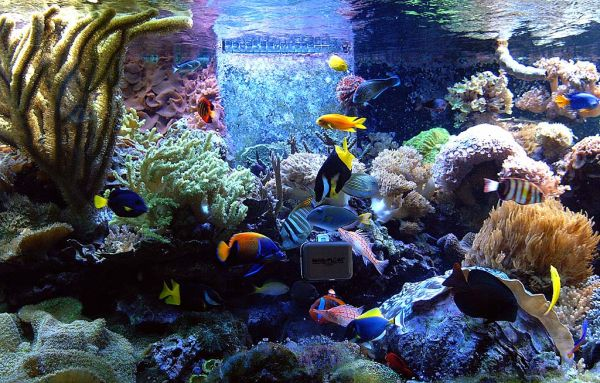 Charming Fish Tanks: 28 Playful Pictures : Spectacular Fish Tank Seems To Conatin Every Possible Color And Shade