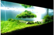 Charming Fish Tanks: 28 Playful Pictures : Stunning Fish Tank Design That Really Kicks In With The Green