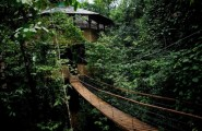 Exceptional Tree House In Tropical Forest Of Costa Rica : Stunning Rope Bridge Ideas Wood Steps Sustainable Treehouse Community
