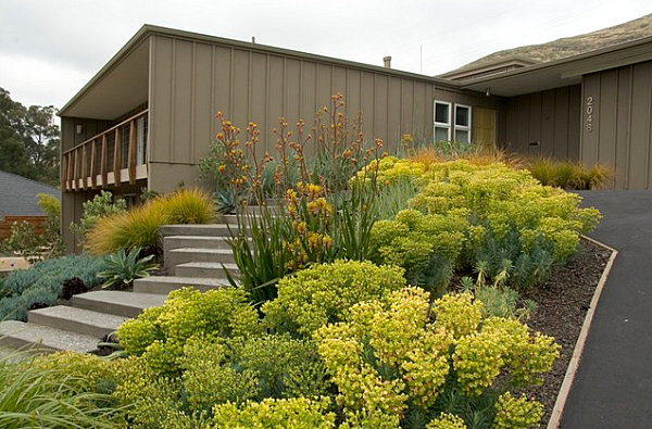 Stunning Front Yard Landscape To Beautify Your House: Stunning Yellow Plants In A Modern Front Yard