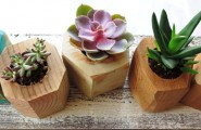 Cute Succulent Decoration As Easy To Care Planter For Your Home : Wonderful Faceted Wooden Gem Planters With Small Shaped Design